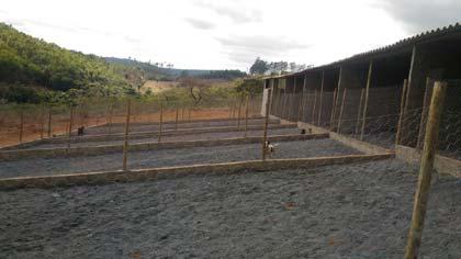 Foto do canil instalado para acolher os animais apreendidos