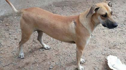 Foto de cão para adoção