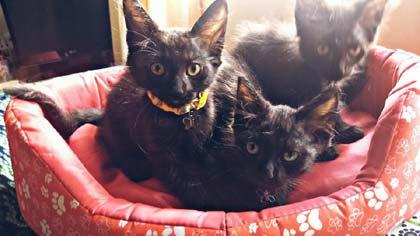 Foto de filhotes de gato