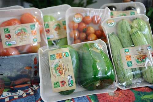 Foto ilustrativa legumes