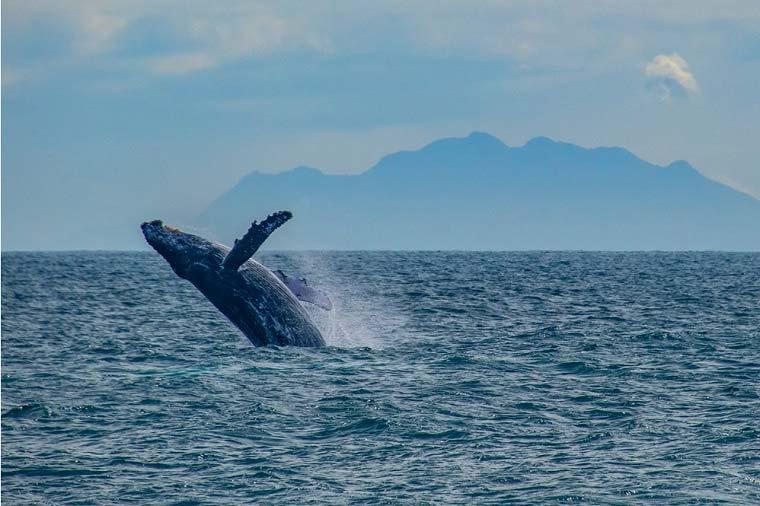 Foto de salto de baleia em alto mar