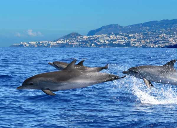 Foto de golfinhos para observação